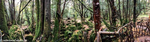Puzzlewood Panoramic