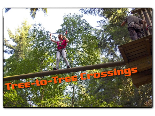 Go Ape Tree Crossings