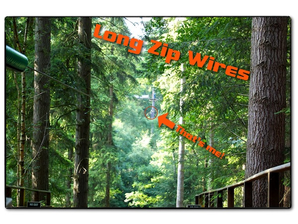 Go Ape Zip Wires