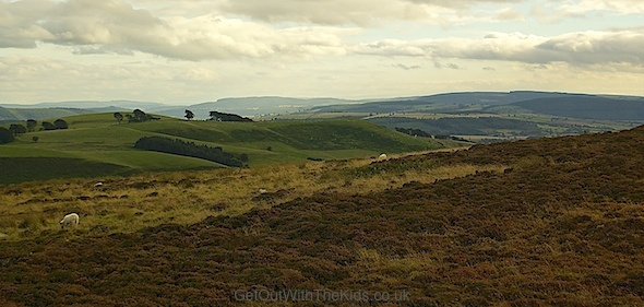 The Long Mynd range of hills in Shropshire: moorland, grassland, and forests. Great for family hikes.