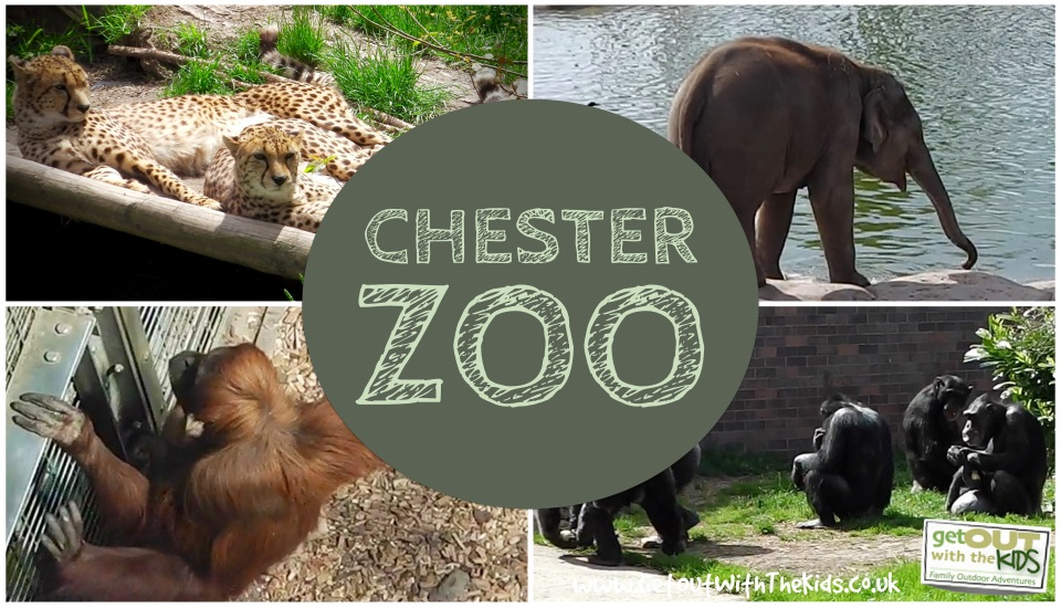 Image result for chester zoo elephant clipart