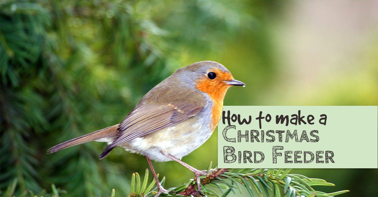 How to make a Christmas Bird Feeder