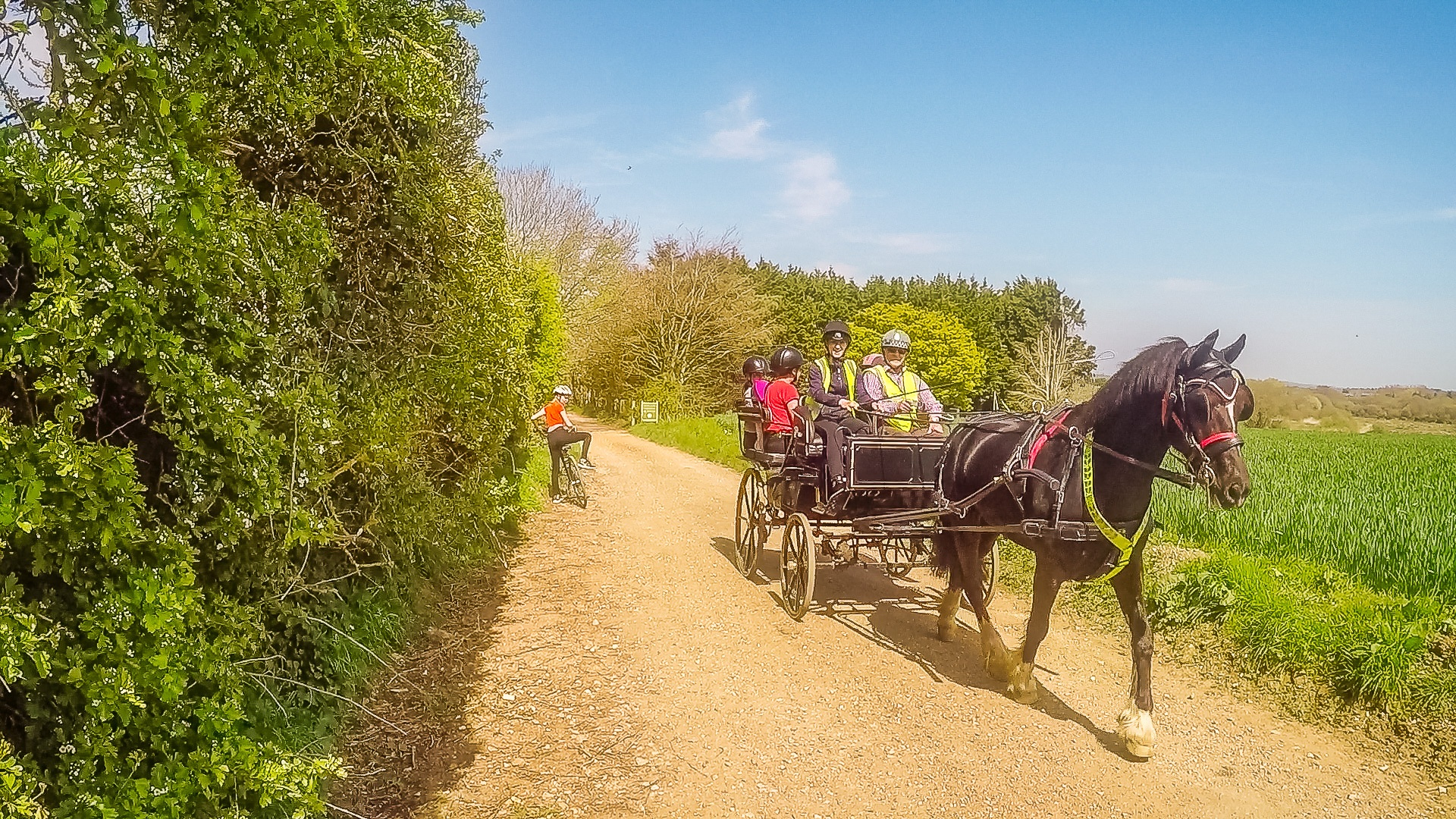 A horse and cart on the Red Squirrel Trail
