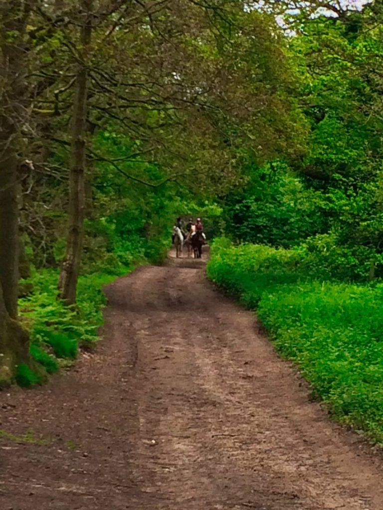 Horses on the Nescliffe trail